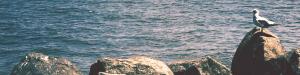 Hudson River Seagull