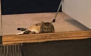 cat in doorway